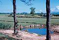 1969 - trên con đường chính ra thành phố Qui Nhơn (9677375135).jpg