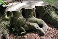 20030524070DR Bad Muskau Fürst Pückler Park Baumstubben.jpg