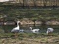 2007Englischer Garten7.jpg