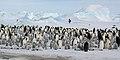 2007 Snow-Hill-Island Luyten-De-Hauwere-Emperor-Penguin-39.jpg