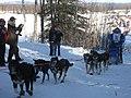 2008 Iditarod Willow (2312154423).jpg