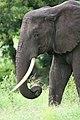 20090507-TZ-NGO Safari 338 (4677390377).jpg