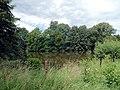 20140809165DR Röhrsdorf (Dohna) Schloßpark Röhrsdorfer Grund.jpg