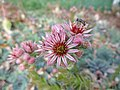 2015.10.06 16.36.08 DSC01068 - Flickr - andrey zharkikh.jpg
