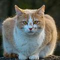 2016-03 Cat in the sunlight 08.jpg