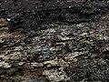 2017-11-10 Paullicorticium pearsonii (Bourdot) J. Erikss 814115.jpg