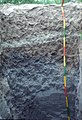 35-polderstmichel-thalassosols-oqs-delmas-profil-0-120cm.jpg