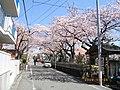 3 Chome Nakasakurazuka, Toyonaka-shi, Ōsaka-fu 561-0881, Japan - panoramio - yokoyokoi (5).jpg