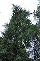 46-101-5033 Lviv Franka 122 Ginkgo RB 18.jpg