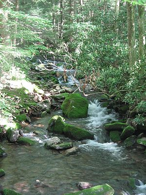 "White Deer Hole Creek - The unnamed tributary in the Fourth Gap of South White Deer Ridge is also rated ""Class A Wild Trout Waters""."