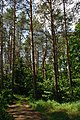 71-249-5039 Stepankivsky SAM 8580.jpg