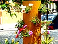 A@a My garden Larnaca Cyprus - panoramio.jpg