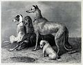 A group of five hunting dogs. Steel engraving by J. C. Webb Wellcome V0020844.jpg