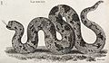 A lachesis snake. Etching by Heath. Wellcome V0021239.jpg
