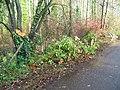 A recent casualty, Boyton - geograph.org.uk - 1660789.jpg