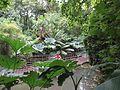 Abbotsbury Subtropical Gardens 01.JPG