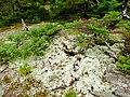 Acadia National Park (8111151200).jpg