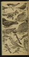 Accompany Manual of Bird Study-0008-scan.png