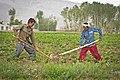 Afghan farmers in Bamyan-2.jpg