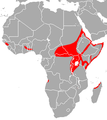 African Sheath-Tailed Bat area.png