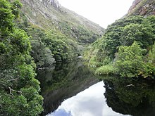 Southern afrotemperate forest wikipedia subdivisionsedit publicscrutiny Images