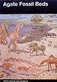 Agate Fossil Beds Handbook.jpg