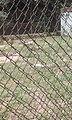 Agodi Garden Ibadan28.jpg