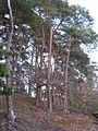 Albersweiler, Germany - panoramio (12).jpg