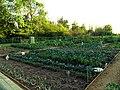 Allotment Gardens, Woolhampton - geograph.org.uk - 27492.jpg