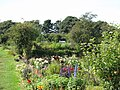 Allotments between Highbury and Jesmond Dene Road (2) - geograph.org.uk - 1568155.jpg