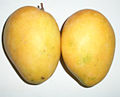 Alphonso Ripe Mango from north India.jpg