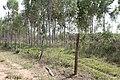 Alto Araguaia - State of Mato Grosso, Brazil - panoramio (1203).jpg
