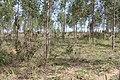 Alto Araguaia - State of Mato Grosso, Brazil - panoramio (1204).jpg