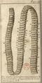 Andry - De la génération des vers (1741), planche p. 197.png