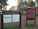 Anemone coronaria in Megiddo Airfield (4).jpg