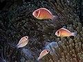 Keindahan dan Pesona Taman Nasional Komodo dan Pulau Komodo