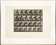 Animal locomotion. Plate 564 (Boston Public Library).jpg