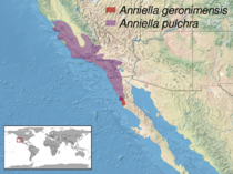 Anniella sp. distribution.png