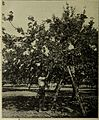 Annual report of the Fruit Growers' Association of Ontario, 1914 (1915) (18741735794).jpg