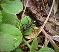 Ant (48948187247).jpg