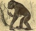 Anthropogenie; oder, Entwickelungs-geschichte des Menschen (1910) (19181758870).jpg