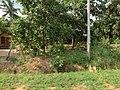 Anuradhapura, Sri Lanka - panoramio (9).jpg