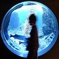 Aquarium 5 - Flickr - chidorian.jpg