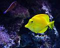 Aquarium Fish.jpg