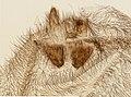 Araneae (YPM IZ 098215).jpeg
