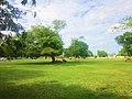 Areas verdes en el Bolevard Bahía. - panoramio.jpg