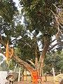 Around and near Anand Bhavan, Swaraj Bhavan, Allahabad, IRCTC 2017 (3).jpg