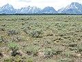 Artemisia arbuscula and Artemisia tridentata vaseyana (9371408955).jpg