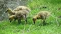 Assiniboine Park Zoo, Winnipeg (480465) (9447767488).jpg