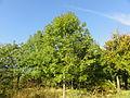 Auchy-au-Bois - Terril n° 35A, 3 bis de Ligny Ouest (09).JPG